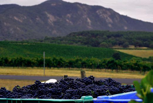 mount-langi-harvest.jpg